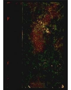 Sylloge Fungorum Omnium Hucusque Cognitorum: Tomo 4 - Apéndice 1
