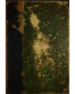 Sylloge Gasteromycetum, Phycomycetum et Myxomycetum Omnium Hucusque Cognitorum: Tomo 7